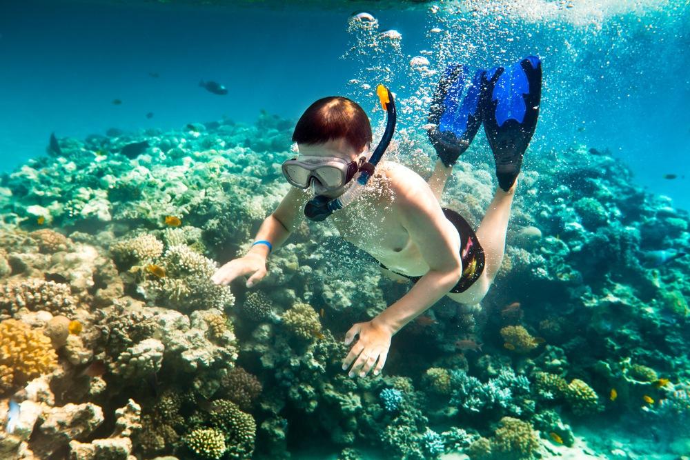 Lặn biển ngắm san hô tại Đồi Mồi